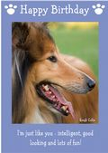 "Rough Collie-Happy Birthday - ""I'm Just Like You"" Theme"